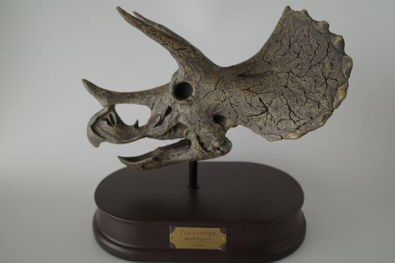 大人の恐竜模型館 フェバリット Favorite トリケラトプス スケルトン 恐竜フィギュア レビュー